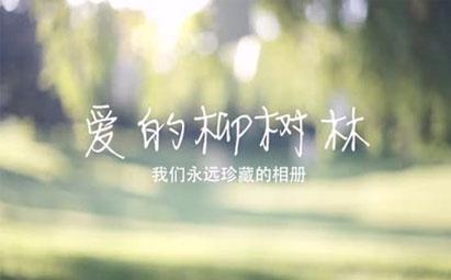 AE自然风光唯美柳树林浪漫婚礼模板