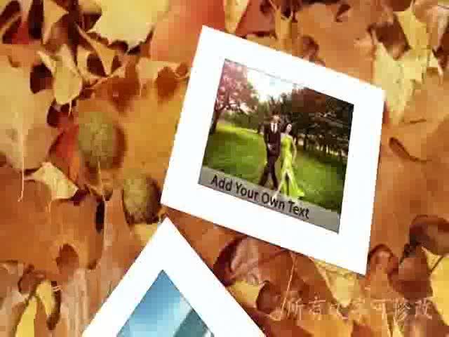 AE枫叶婚礼电子相册视频模板