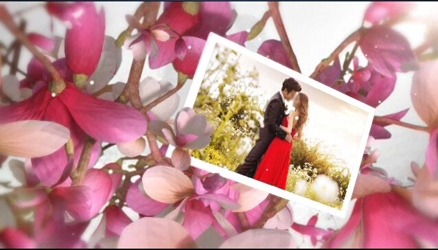 AE唯美紫色爱情树电子相册婚礼模板
