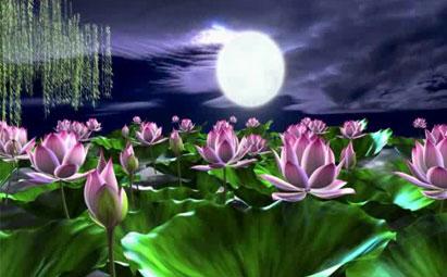 高清荷塘月色LED鲜花视频素材