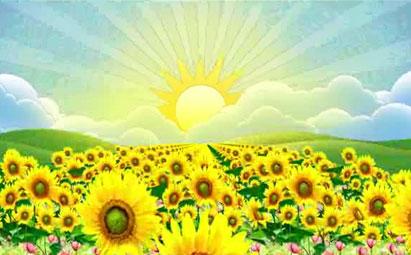 高清向日葵LED晚会演出视频素材