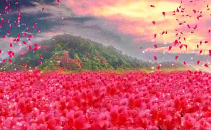 超高清杜鹃花LED鲜花背景素材