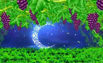 高清紫色葡萄园LED鲜花视频素材