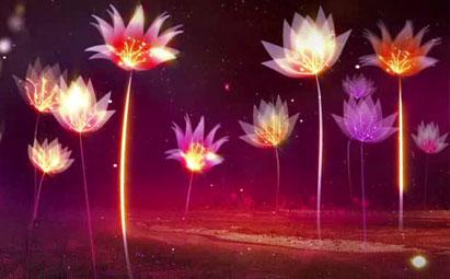 唯美梦幻荷花盛开LED晚会演出鲜花背景素材