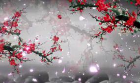 高贵红梅花开LED晚会演出视频素材