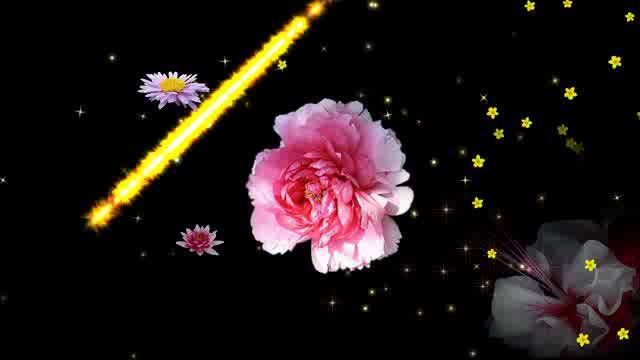 LED炫光花景晚会视频素材