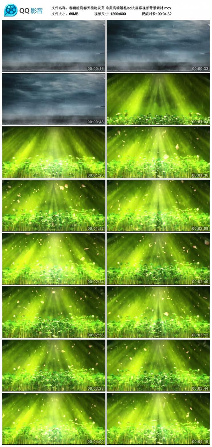 春雨滋润春天植物发芽 唯美高端婚礼led大屏幕视频背景素材