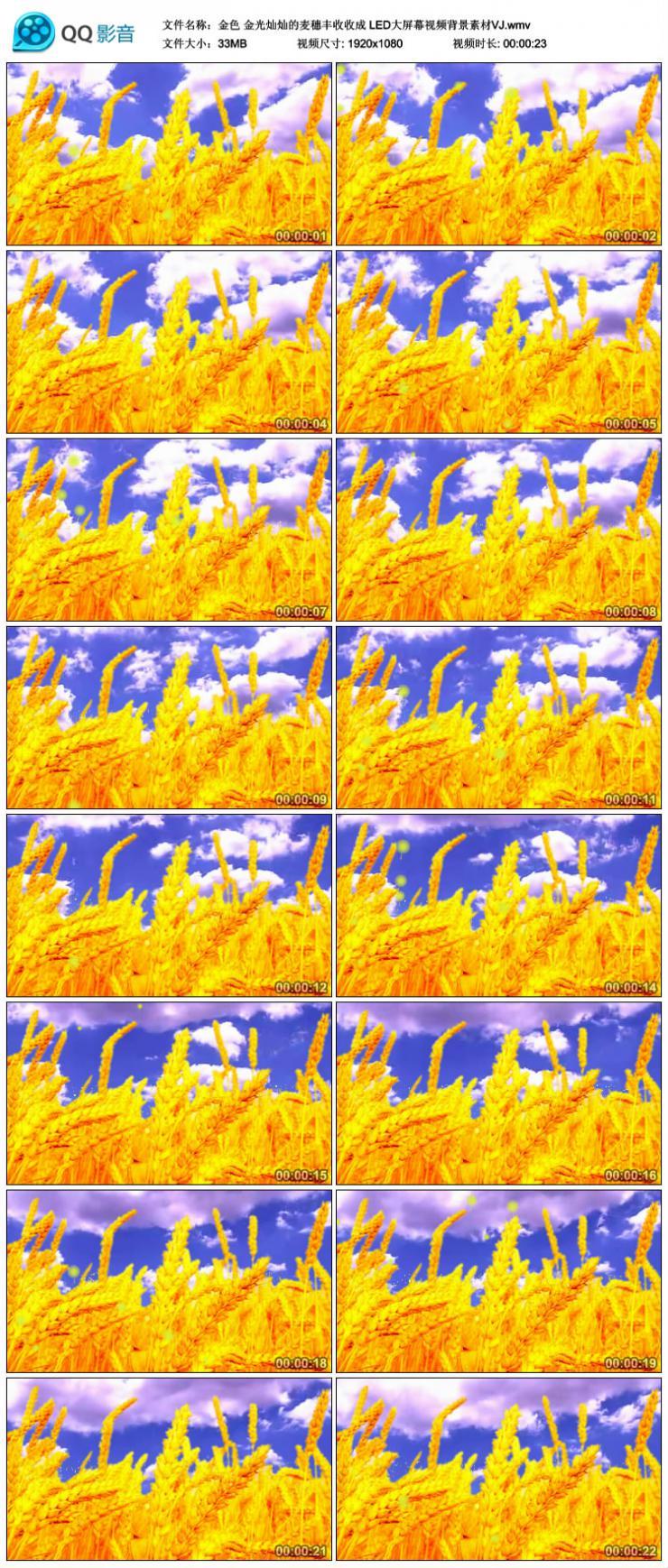 金色 金光灿灿的麦穗丰收收成 LED大屏幕视频背景素材VJ