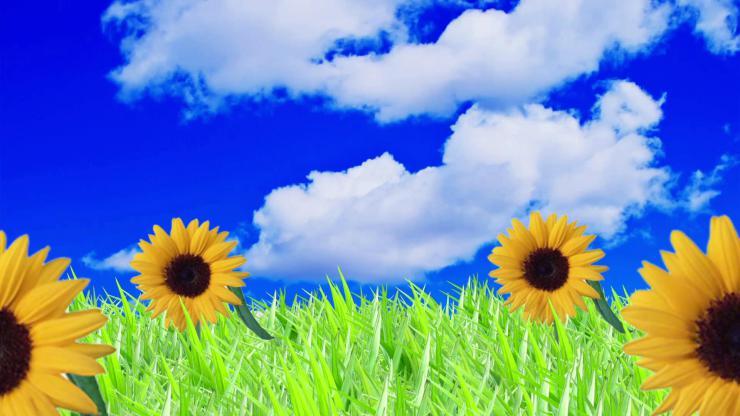 蓝天草地鲜花视频
