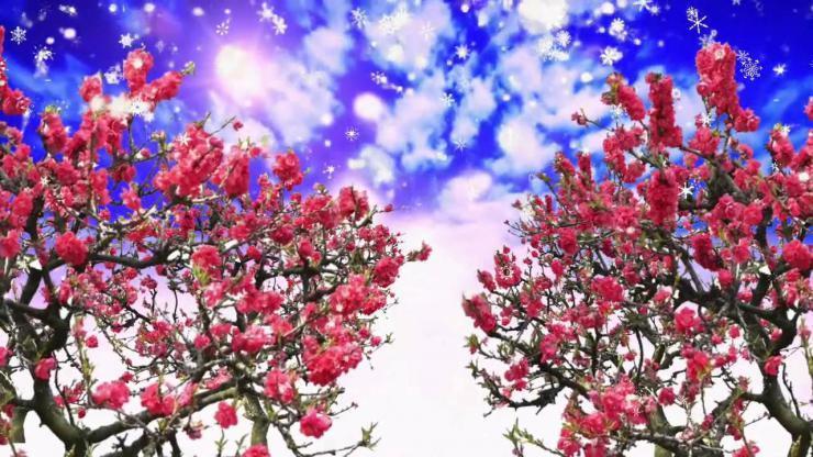 梅花树仙境世外桃源视频