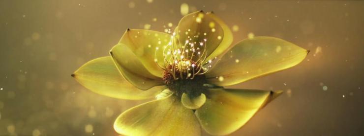大气金色花儿背景视频