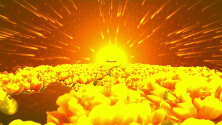 大气花海背景视频