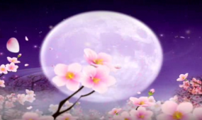 梅花动态视频歌曲舞蹈诗歌朗诵LED舞台背景视频素材