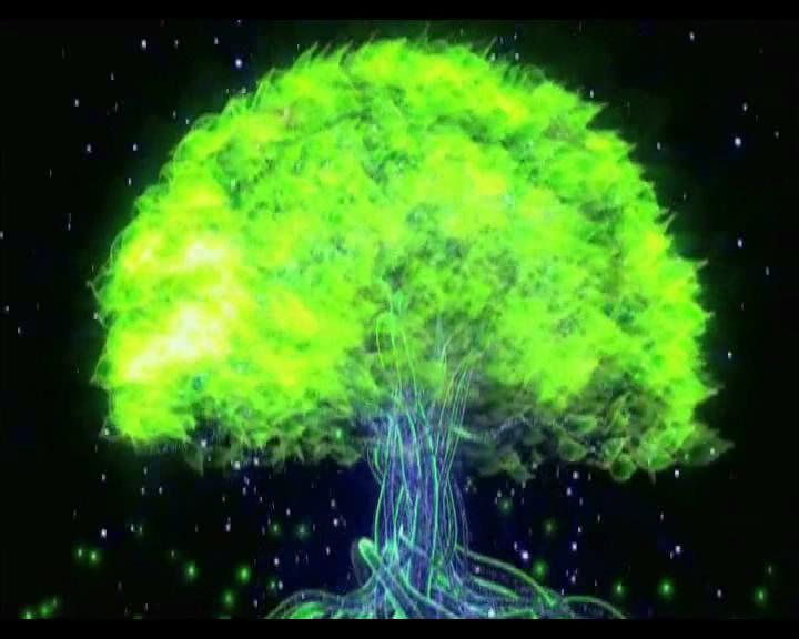 大树成长动态视频