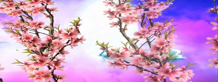 梅花朵朵开 婚礼婚庆视频素材