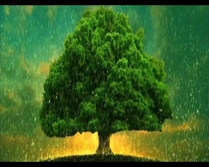 四季之树动态视频