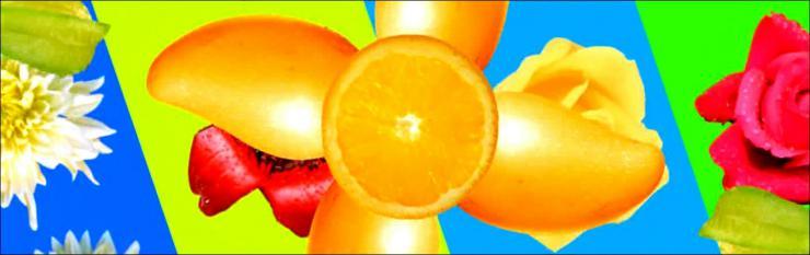 水果蔬菜鲜花大聚会