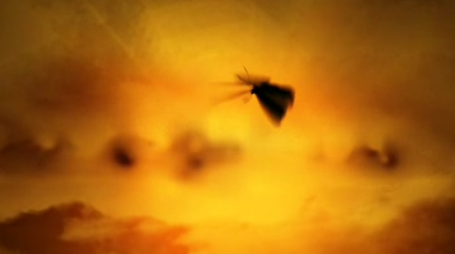 AE夕阳红蝴蝶飞舞文字LOGO视频模板