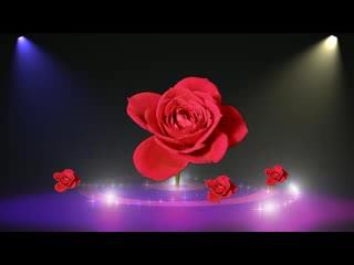 LED 背景素材 唯美浪漫  玫瑰