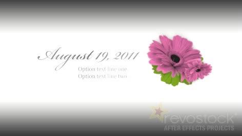 AE经典灰白浪漫爱情婚礼视频模板