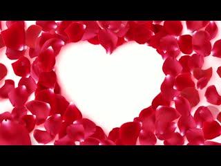 LED婚礼 爱心花瓣  视频素材背景