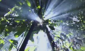 实拍自然风景  阳光森林 视频素材