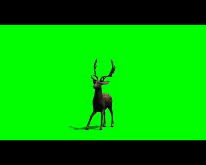 麋鹿动态视频素材01
