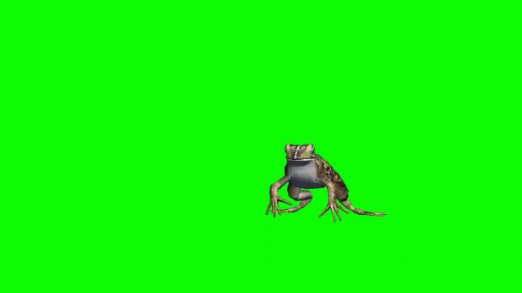 青蛙动态视频素材