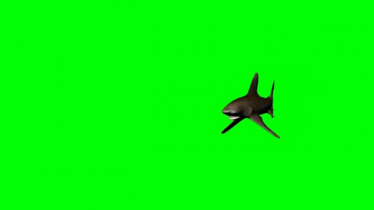 鲨鱼动态视频素材02