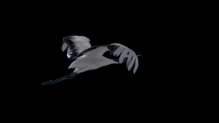 仙鹤飞翔动态视频—带通道