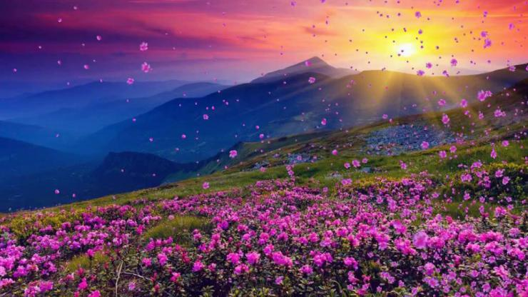 映山红花朵飘飞太阳山坡红歌革命背景