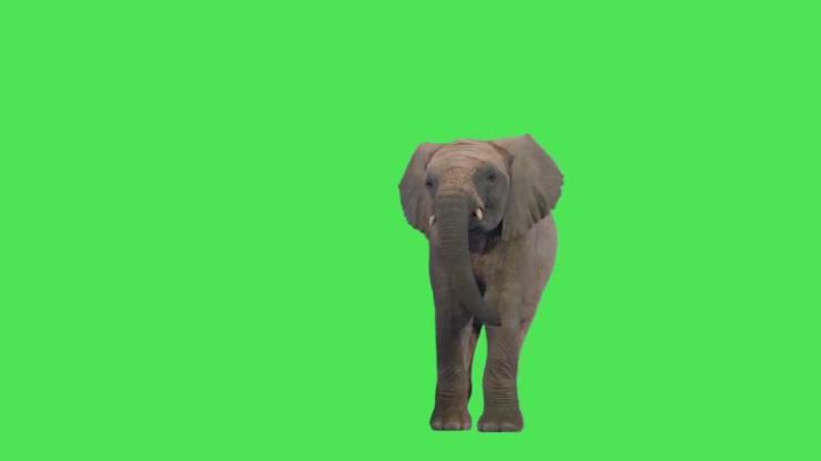 大象动态视频素材