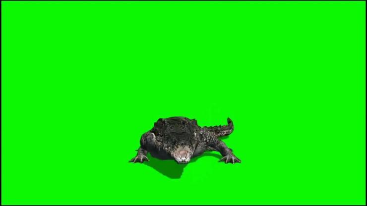 鳄鱼动态视频素材