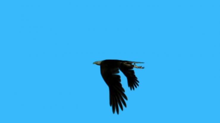 老鹰飞翔动态视频素材