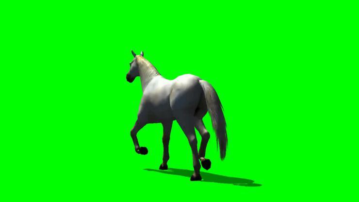 马动态视频素材01
