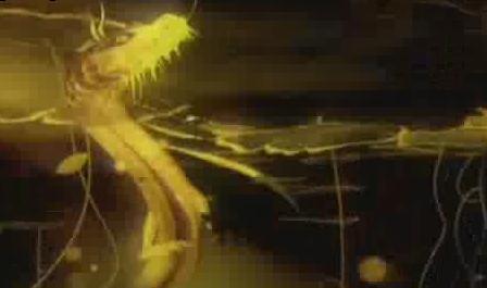 酒吧vj 龙鹰独角兽蝎子 视频素材