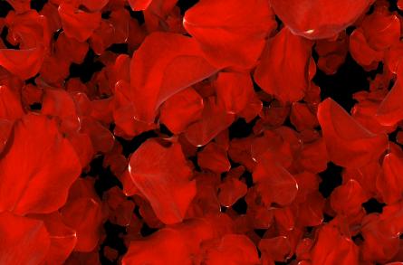 玫瑰花瓣LED视频素材