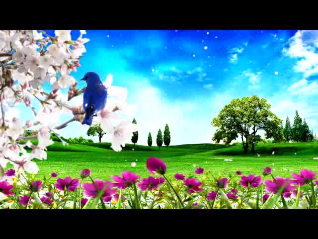 春日花鸟LED视频素材