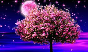 桃花月亮花瓣视频素材