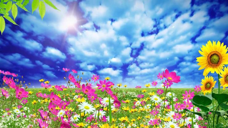 草原鲜花LED视频素材