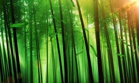 竹林 視頻素材