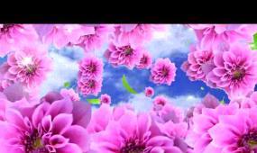 满天飞舞-粉红色花开 花海视频 LED舞台高清背景视频素材