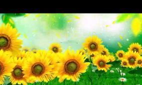向日葵蝴蝶花瓣LED晚会背景视频素材