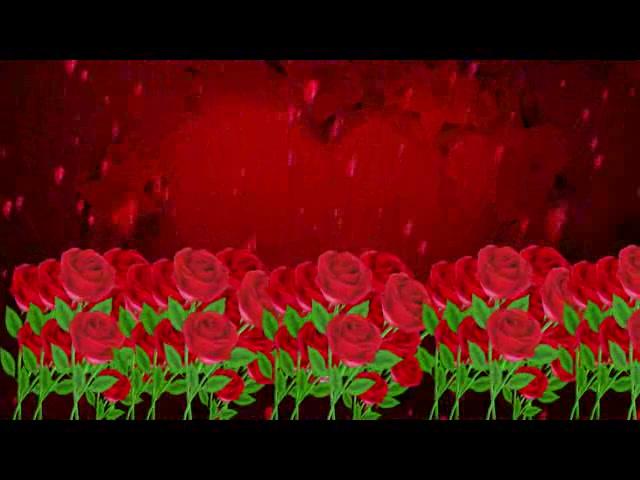 玫瑰花海爱心