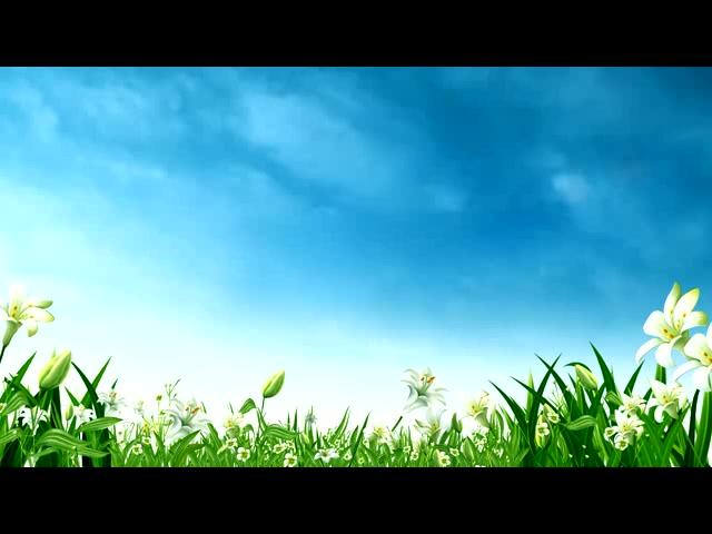鲜花花草背景