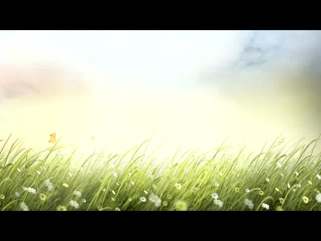 鲜花草地落叶