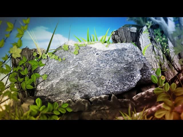 石头落叶草丛