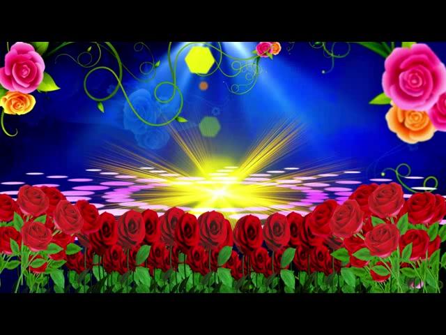 玫瑰花海花朵生长
