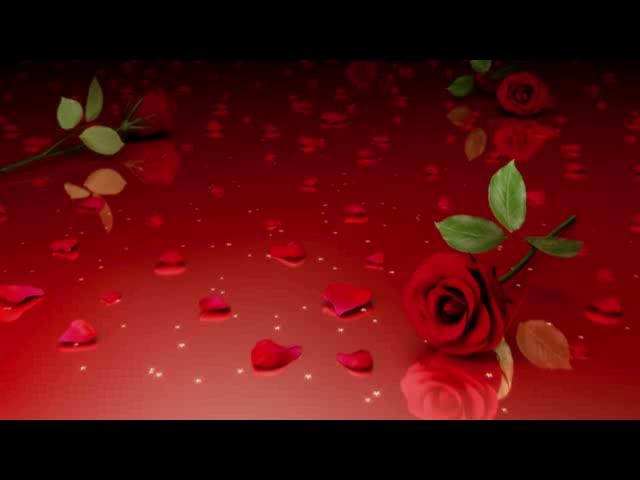 高清唯美玫瑰花合集