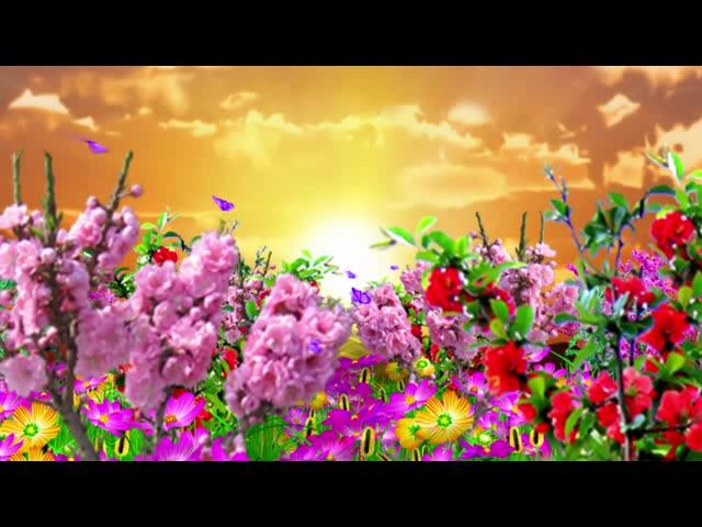 唯美春天鲜花
